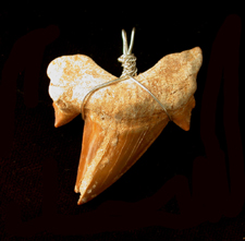 Fossil Shark Tooth Pendent