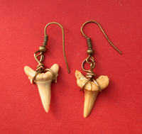 Fossil Shark Teeth Earrings